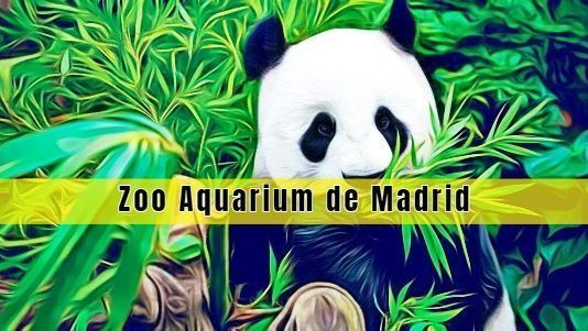 Visitar el Zoo Aquarium de Madrid
